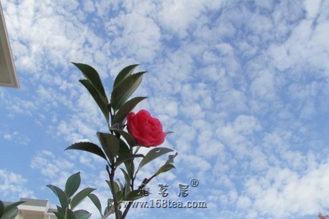 灌一个:花语白云