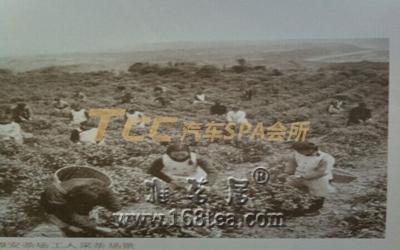 藏茶的制作工艺详解