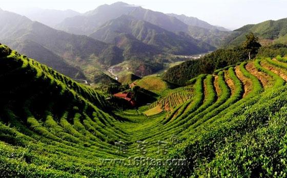 《茶叶分类》国家标准自将于2014年10月27日正式实施
