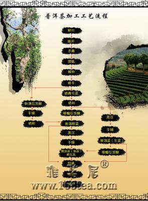 云南普洱茶的生产制作程序及工艺