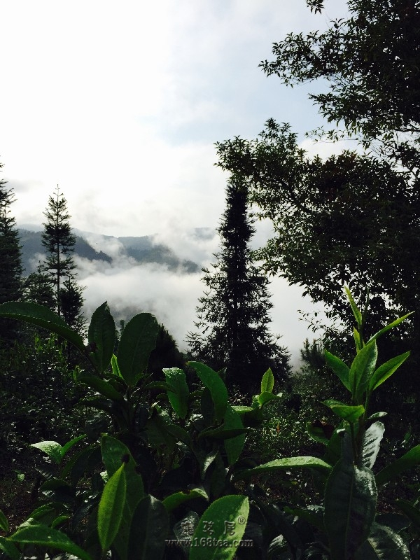 2016年秋茶寨之旅。