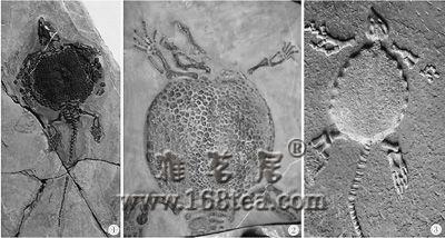 中国化石人为污染严重 民间修补导致假化石泛滥