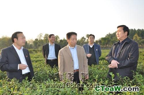 桐柏县走出一条特色主义的茶产业