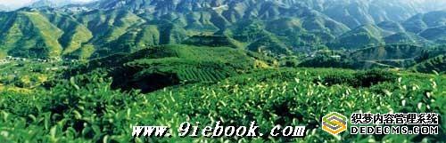 福建安溪悠久的种茶历史[图]
