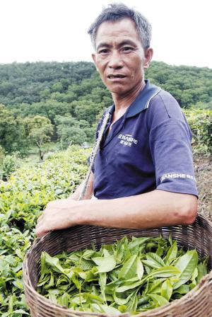 茶商自述普洱茶工艺品