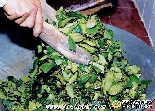 铁观音茶艺的起源与发展