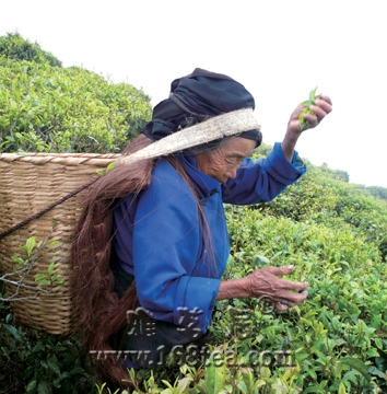 茶叶推动饮料行业崛起