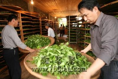 绿茶制作工艺流程