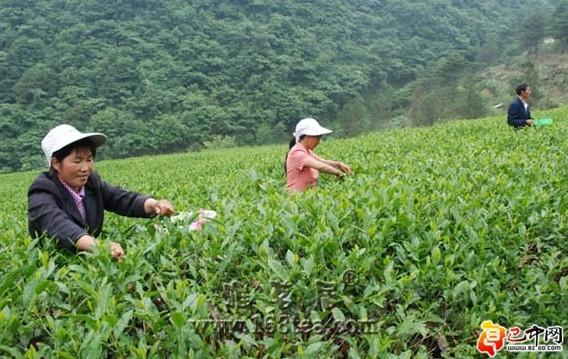 通江县实施连片扶贫开发吹响脱贫致富的集结号