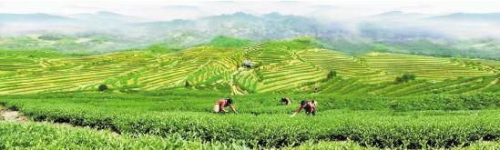 龙泉:树立现代农业新标杆