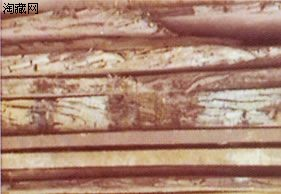 探询历史的沉淀――阴沉木揭秘
