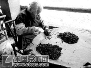 武夷山:老太拣茶七十五载