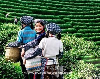 茶叶易受哪些因素影响?