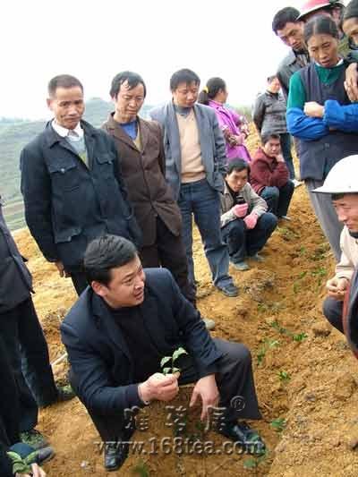 湄潭组织茶农现场培训茶叶栽种技术(图)