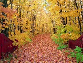 秋季错误减肥的误区有哪些?