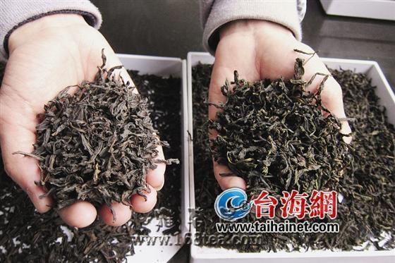 武夷岩茶仿制盛行 是真岩茶两三倍