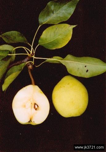 饭后吃个梨能排致癌物