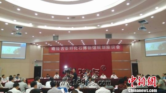 """贵州拟建""""中国古茶籽化石博物馆"""" 推进茶旅一体化发展"""