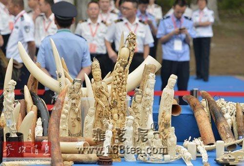 中国承诺彻底取缔国内象牙贸易