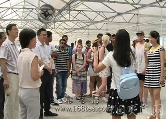 三峡大学外国留学生参观宜昌夷陵区茶产业发展