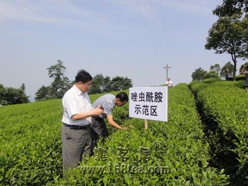陈宗懋:茶叶农残问题是个伪问题