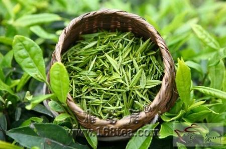 美国研究发现:绿茶有益心脏乌龙茶瘦腰身