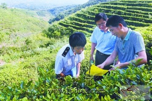汉中检验检疫局在出口茶叶备案基地监测病虫害