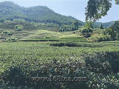 福建南平:产茶大市转型升级进行时