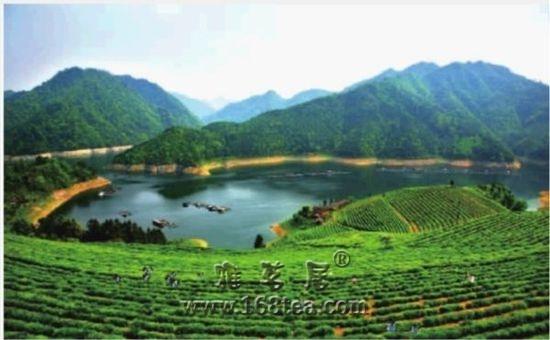 """湖南常宁茶产业:悄然升起的""""绿色金矿"""""""