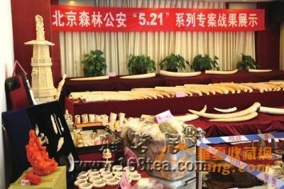北京破获最大贩卖象牙案 涉案价值达2439万元