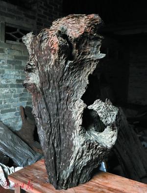 沉木进入收藏领域身价倍增 一棵完整古树可卖几十万元
