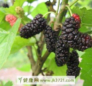 黑色水果的好处,哪些是黑色水果