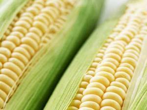 玉米有什么营养价值