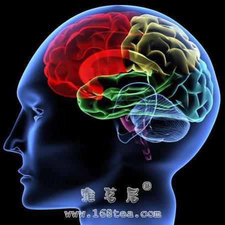 生命探索:大脑能治病
