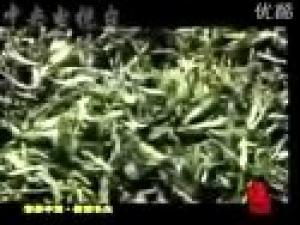 信阳毛尖茶艺视频