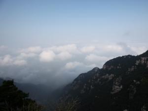 庐山云雾|江西名茶