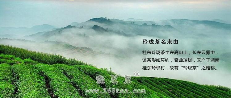 桂东玲珑茶|湖南名茶