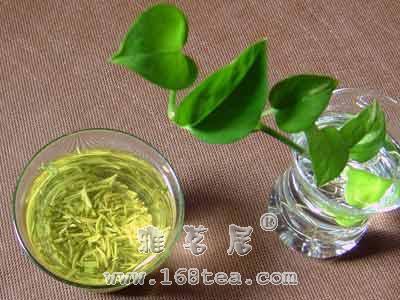 优质绿茶审评