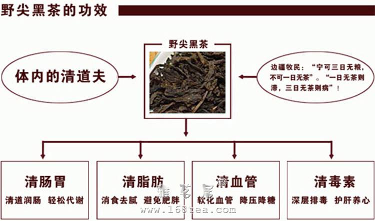 安化野尖黑茶|黑茶品种