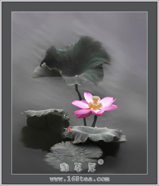 莲――提琴曲(神秘园)