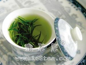 春季饮新茶叶须知