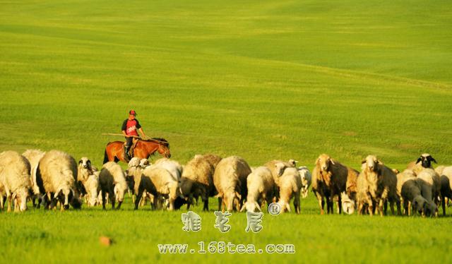 蒙古族的饮茶风俗:咸奶茶介绍