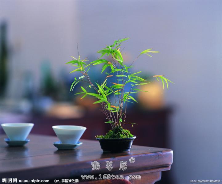 明清泡茶道 |古今茶道