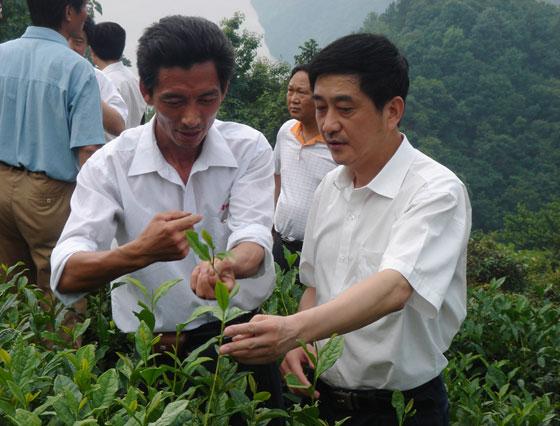 中国当代茶界名人-宛晓春教授
