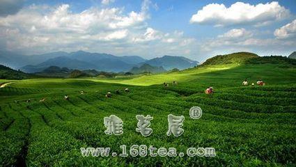 贵州茶人刘立访谈|茶人茶事