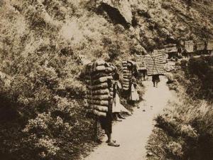 茶马古道的千年历史变迁|中国茶文化