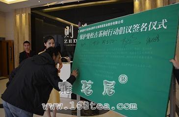 昆明茶叶协会携手云南则道茶业一同开展保护曼松古茶树行动