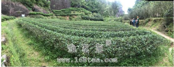 """走近""""肉桂王子""""---探访武夷山最大的手工制茶工坊"""