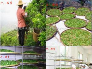 关于凤凰水仙与凤凰单丛|广东乌龙茶品种