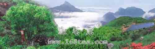 潮州单丛茶生态系统浅析|凤凰单枞茶